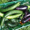 夏野菜をたくさん食べるだけダイエットに挑戦