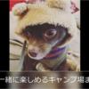 関東近郊の犬連れで行けるキャンプ場7選