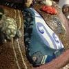 美豆兎と家鴨窯  コラボ作品。