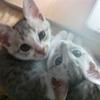 第10ピコピコ あれは3年前 ネコたちとの出会い