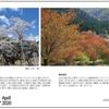 山の自然学カレンダー2020 4月・根尾谷の淡墨桜/春色満彩