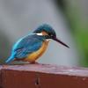 山田池公園の野鳥 (^。^)