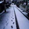 八王子はすでに雪