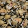 『バイ貝の旨煮』