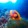 ♪水中デジタル写真をマスターしようよー♪〜沖縄ダイビング青の洞窟スペシャルティSP〜
