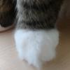 猫の手も借りたい ~ふわふわお手々~