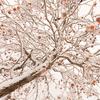 2016年末一人旅 第四週(223)久慈の雪景色11