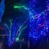 新宿駅西口のイルミネーション♪♪