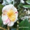 パワーを秘めた花だから✾椿づくしのあれこれを