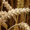 【ロウカット玄米】薬に頼らず、便秘を食事から変える方法【食べ方】