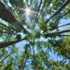 温暖化防止の最善の策は、地球規模での1兆本の植樹