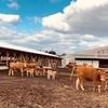 菊池農場  あか牛新繁殖牛舎