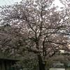 【2012年舞台探訪報告】アニメ「涼宮ハルヒの憂鬱」春の舞台探訪【2012年4月12・13・15日】