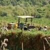 -写真- ブドウ畑で働くおじさん