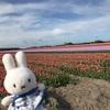 世界最大の花畑ザイプ