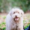 犬のポートレート撮影モデル募集しております!!