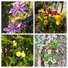 春から夏に向かう庭【つれづれ】20180701 (はてな1197記事)