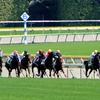 【関屋記念 2019 予想】過去のレース傾向分析&各馬評価まとめ /  時計の出る馬場、力勝負での狙いは?