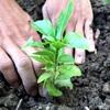 木を植えよう🌿