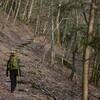 雨水の西熊の森遊山 冬枯の森