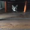 剪定の準備と作業中の猫