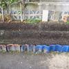【家庭菜園】6種類中5種類、発芽