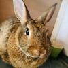 ウサギのちまき今日の1枚『ウサギにもまつ毛があるんですね』