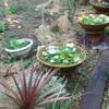 玉ねぎに追肥&ジャガイモ収穫