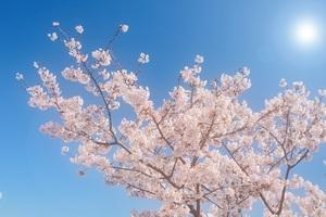 春の彼岸法要に参詣:御塔婆建立&墓参してきました