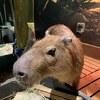 【みなとみらい】あと4日!年内で閉業の様々な動物たちに触れあえる施設に駆けこんできました:オービィ横浜(神奈川県横浜市西区)