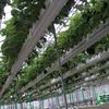 手のひらサイズの培地量でいちご栽培!