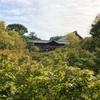 東福寺へ行ってきました