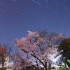 東京夜桜巡り⑥~芝公園 桜と星の共演等~
