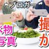 【iPhone】食べ物を美味しそうに撮るためのたった3つのテクニックの話