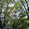 名古屋で散歩