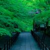 京都・長岡京 - 初夏の光明寺