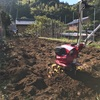 ブロッコリー植え替え準備