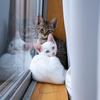 【1日目】ついに我が家に猫が来た!