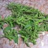 枝についた豆