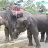 象に乗りたい!【おすすめのプーケットのエレキャン】