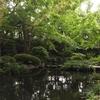 日本庭園を眺めながらのランチ