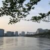隅田川テラス12キロ:走れず・・・風邪を引いたのか?