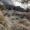 桜は満開!お腹は満腹!ランチは粉モノ2連発!@地蔵堂・金時山 2019.4.7