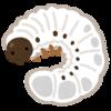 クワガタの幼虫が死んでしまう原因と初心者にありがちな失敗。