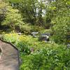 京都府立植物園の植物生態園