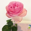 12月3日(土)「生け花の時間」