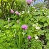 5月 ハーブ開花