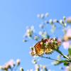 小石川植物園でどちらかというと昆虫を撮ってきた!