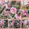 立春/First day of spring/二十四節気