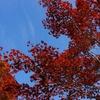 【紅葉】矢板あたりをフラフラと・・・【八方ヶ原】